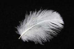 白色的接近的羽毛 免版税库存照片