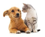 白色的背景接近的半小猫枪口纵向小狗 免版税图库摄影