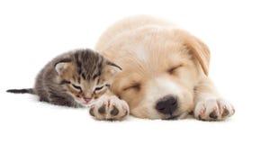 白色的背景接近的半小猫枪口纵向小狗 库存照片
