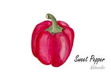 白色的背景接近的胡椒甜点 在白色背景的手拉的水彩绘画 也corel凹道例证向量 图库摄影