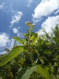 白色矮小的野花 图库摄影