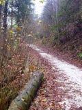 白色石渣路在11月森林里 免版税图库摄影