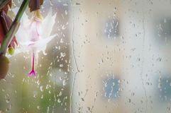 白色石生仙人掌花和11月雨 免版税图库摄影