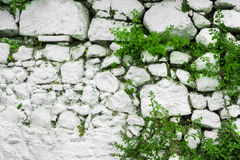 白色石头墙壁与叶子和植物的 图库摄影