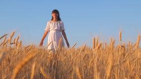 白色礼服的女孩是走和微笑对金黄麦子,女孩` s手感人的成熟麦子耳朵的领域,慢 股票视频