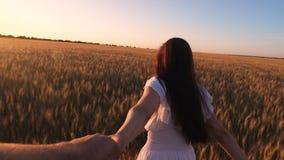 白色礼服的女孩横跨领域跑用用手拿着她心爱的人的麦子在金黄太阳的焕发 慢的行动 影视素材