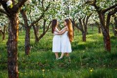 白色礼服的美丽的少女在有blosoming在日落的苹果树的庭院里 拥抱二的朋友 免版税库存照片