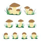 白色等概率圆蘑菇例证集合 库存照片