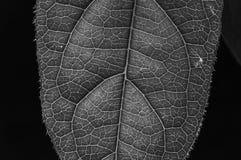 黑白色纹理叶子 免版税库存图片