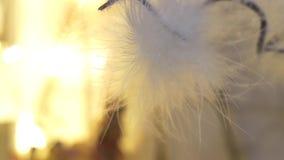 白色绒毛 尘土漩涡在天空中 股票视频