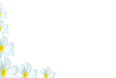 白色羽毛开花背景在角落 免版税库存图片