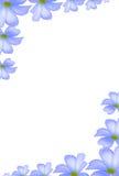 白色羽毛开花背景在角落 库存图片
