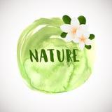 白色羽毛花略写法 导航白色两与绿色叶子的赤素馨花花的例证 温泉或秀丽中心商标 库存照片