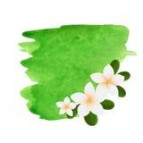 白色羽毛花略写法 导航白色两与绿色叶子的赤素馨花花的例证 温泉或秀丽中心商标 图库摄影