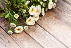 白色翠菊花 免版税库存照片