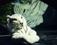 白色老虎填充动物玩偶 免版税图库摄影