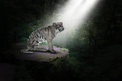 白色老虎,密林,自然,野生生物,大猫 免版税库存照片