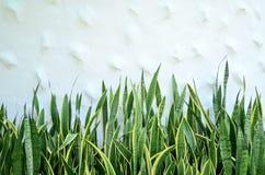 白色背景的小植物 免版税库存图片