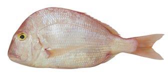 白色背景的桃红色海 免版税图库摄影
