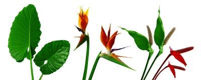 白色背景的植物 模式 免版税库存照片