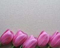 白色背景的顶视图与桃红色郁金香春天电灯泡的为拷贝和文本开花 库存照片