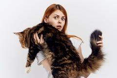 白色背景的年轻美丽的妇女拿着一只猫,缅因浣熊,宠物 库存照片