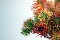 白色背景的03色的植物 免版税图库摄影