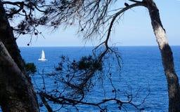 白色航行游艇的看法在蓝色海通过杉木分支  免版税库存照片