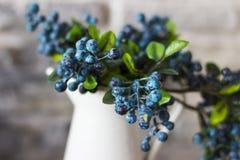 白色花瓶和蓝莓 蓝莓,沼泽越橘,伟大的越桔灌木  库存图片
