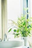 白色花瓶的,家内部卫生间绿色室内植物 免版税库存照片