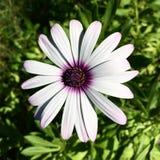 白色花自然秀丽 免版税库存照片