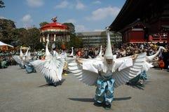 白色苍鹭舞蹈 库存图片