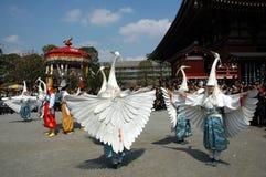 白色苍鹭舞蹈 免版税库存照片