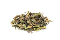 白色茶bai mu丹宽松绿色叶子  免版税库存照片