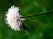 白色草甸花和昆虫 免版税库存照片