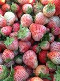 白色草莓 免版税图库摄影