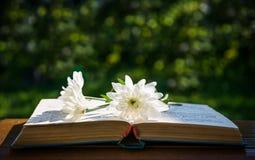 白色菊花和一本旧书 库存图片