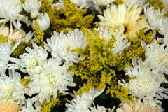 白色菊花和含羞草黄色花在花束的在花市场,顶视图上 免版税库存图片