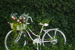 白色葡萄酒自行车 库存图片