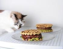 白色蓝眼睛的猫品尝与牛肉剁的汉堡,鳄梨调味酱捣碎的鳄梨酱,樱桃调味汁 奶油被装载的饼干 库存图片