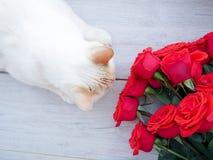 白色蓬松家猫和玫瑰花束,在木背景,文本的空间 免版税库存照片