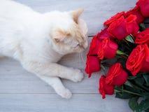 白色蓬松家猫和玫瑰花束,在木背景,文本的空间 库存照片