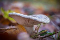 白色蘑菇在森林里 库存照片