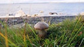 白色蘑菇在草的海滩增长 股票录像