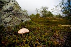 白色蘑菇在青苔增长 图库摄影