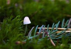 白色蘑菇在绿色森林里 免版税库存照片