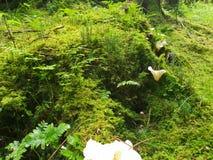 白色蘑菇森林徒升风景 库存图片