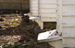 白色蜂房和许多蜂 免版税库存照片