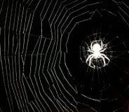 白色蜘蛛` s网在晚上 库存图片