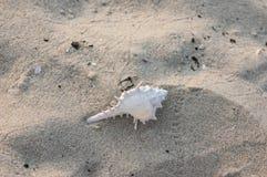 白色螺旋形介壳 库存照片